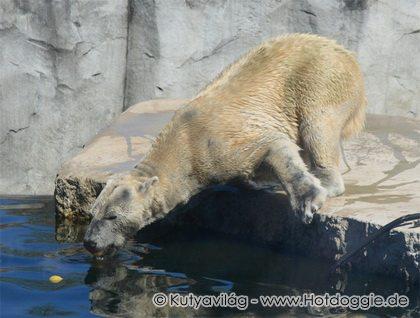 Jég Marci a jegesmedve