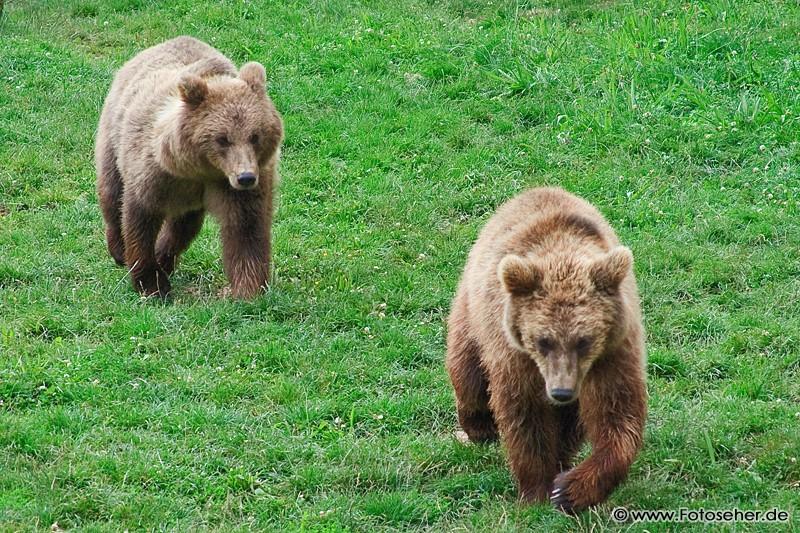 Állatos képek és állat videó: Tripsdrilli vadasparadicsom Németországban