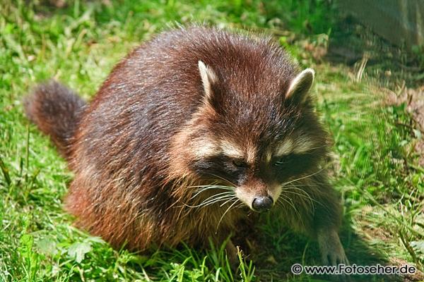 Állatos képek és állat videó: Pforzheimi vadaspark Németországban