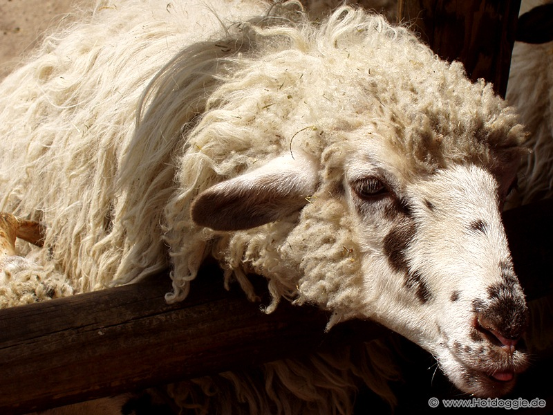 A szándékos gyújtogatás miatt elpusztult állat / állatok a Karlsruhei állatkertből