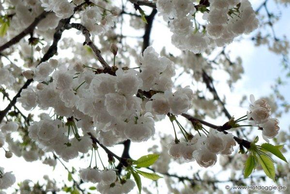 Tavaszi természetképek, tavaszi virágok