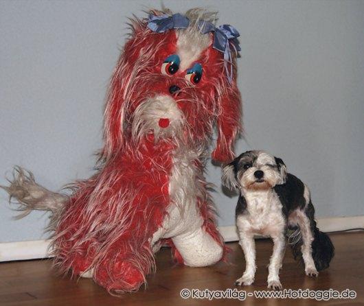 Kamilla a piros-fehér plüsskutya és Murray a fekete-fehér Bichon Havanese kiskutya