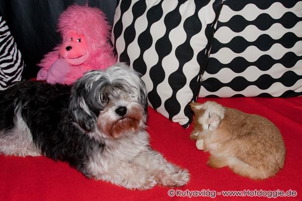 Egy plüssmajom, egy plüsscica és egy igazi kiskutya