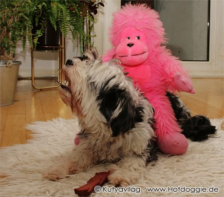 Adalbert a plüssállat Murray kutyán lovagol