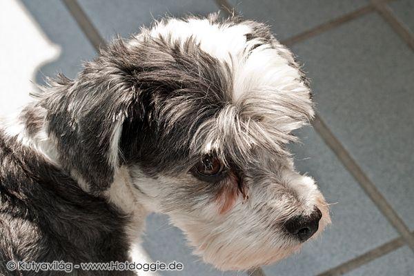 A kakukktojás avagy Az erkély ékessége: Murray kutya