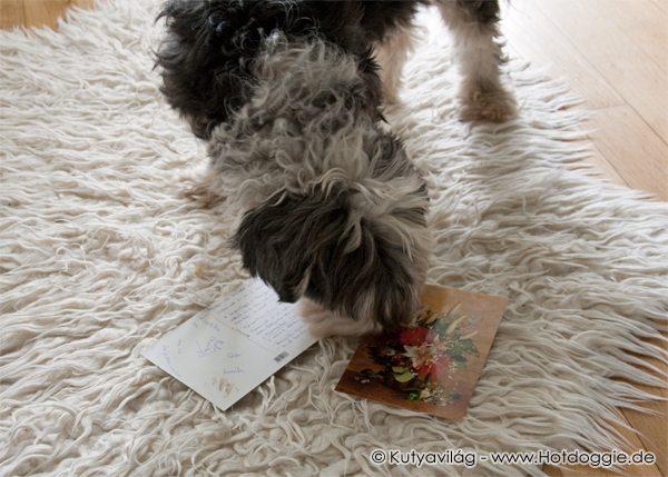 Murray kutya a képeslapos nagy meglepetésekkel
