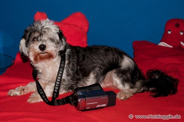 Murray kutya és Jessica a Sony Handycam