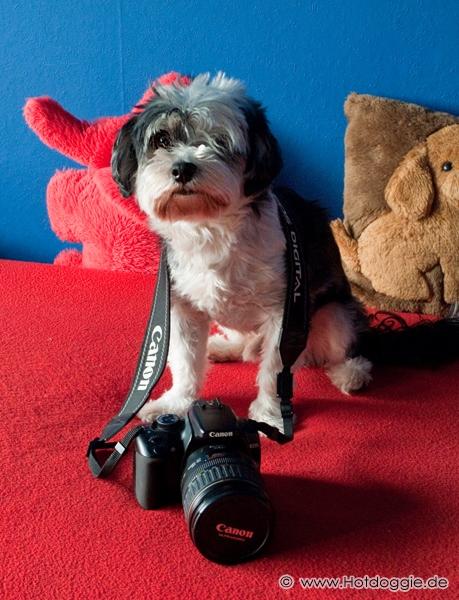 Murray kutya és Napóleon a Canon Digital Camera