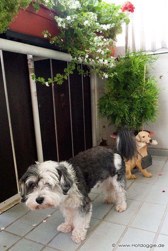 Murray kutya és az erkély kutya