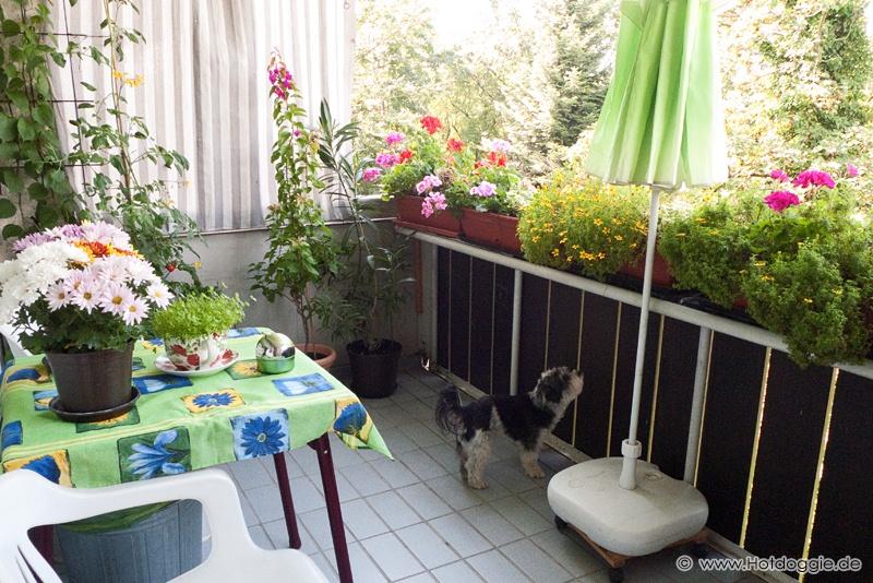 Murray kutya az erkélyen