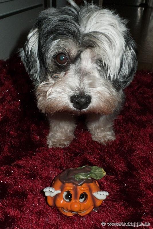Minden kedves látogatónknak Happy Halloweent kívánok!
