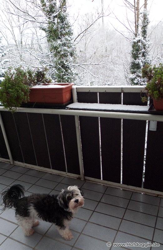 Murray kutya a havas erkélyen