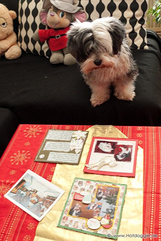 Bichon Havaneser - Karácsony 2010 Scrapbook ajándékkal (Karácsonyi hagyományos fotókönyv. Készítette: Ancika és a Szép Macicsalád - http://macicsalad.freeblog.hu/ )  - © Kutyavilág - www.Hotdoggie.de