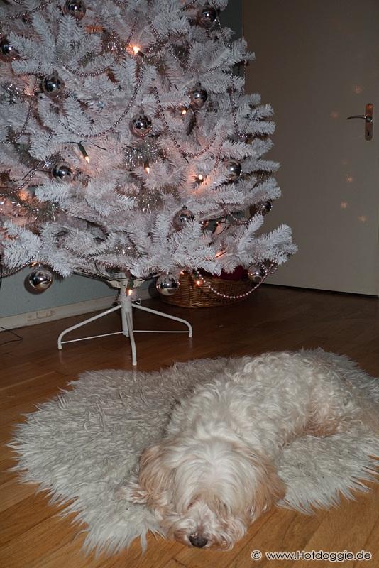 Murray kutya karácsonya és karácsonyi ajándéka (2010)