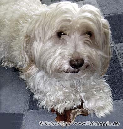 051-dog_charlie.jpg