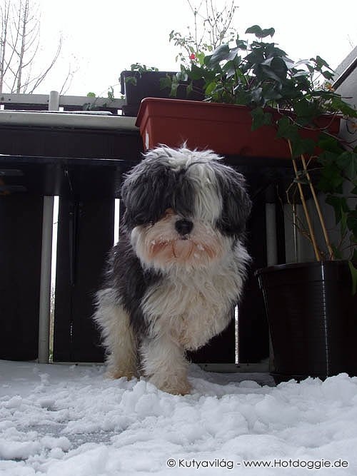 Murray a havas erkélyen