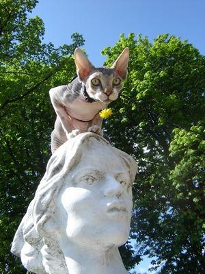 Házikedvencek: Amcsika, a szfinx cica