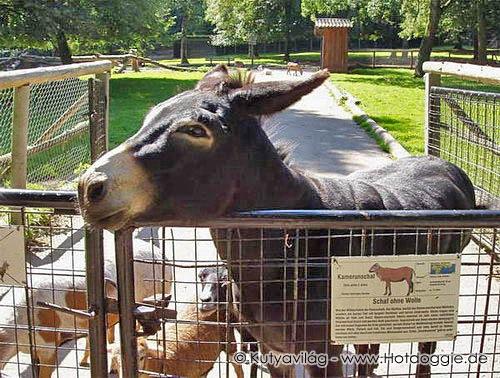 Mesék állatokról: A szamár, aki nem is volt szamár