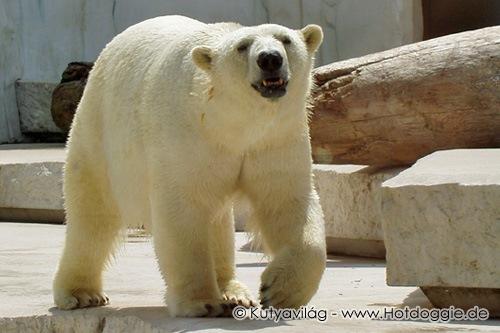 Mesék állatokról:Állatkerti mesék