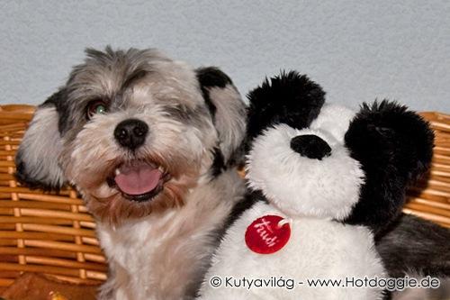 Plüss Klub: Mörri kutya és Mörri plüsskutya