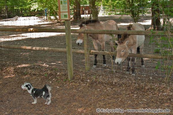 Vigyázat! Kutya a Vadasparkban! (Egy ismeretterjesztő természetfilm extra felvételekkel)