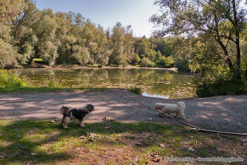 Szalonnasütés a tóparton kutyákkal