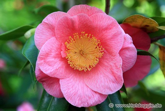 Kivirult virág