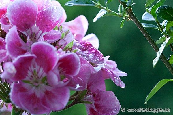 Makrófotó: Esőcsepp-gyöngyök a virágon