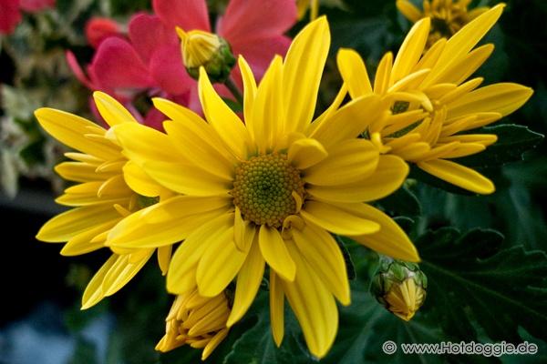 Erkély virágok ősszel