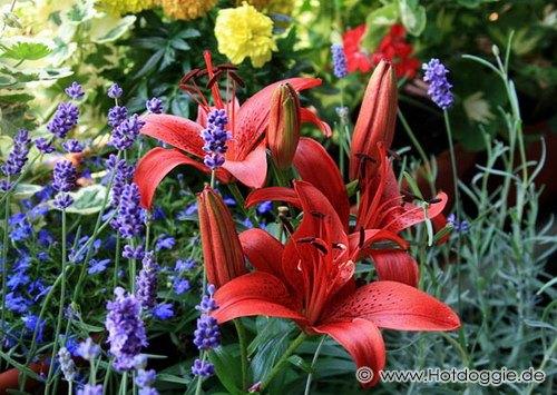 Erkély virágok