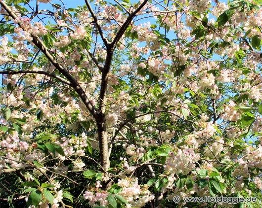 Szépséges tavasz