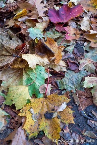 Szines őszi falevek