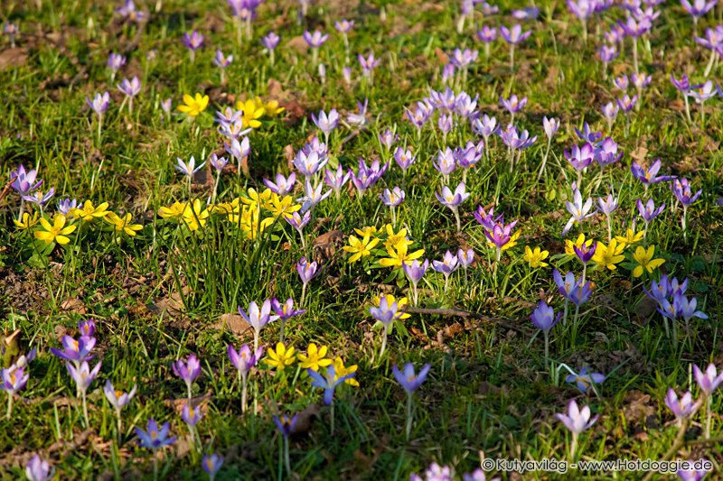 Kora tavaszi virágok