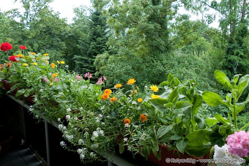 Körömvirágos kiskert az erkélyen (jobboldalról)