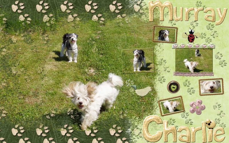 Ancika gyönyörű digitális scrapbook háttérképe Murray és Charlie kutyával