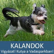15. Mesés kaland: Vigyázat! Kutya a Vadasparkban! (Egy ismeretterjeszto természetfilm extra felvételekkel)