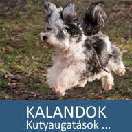 16. Mesés kaland: Kutyaugatások, avagy Hangos és hangtalan oszi kiabálás a parkban