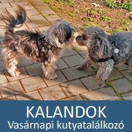 19. mesés kaland: Vasárnapi kutyatalálkozó