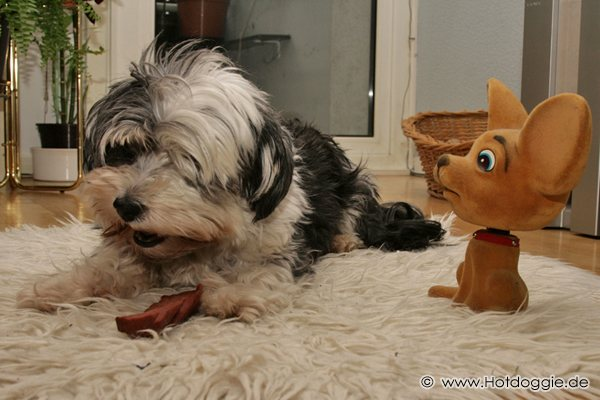 Lucky a sivatagi (plüss)kutya